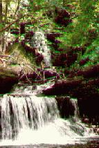Rickets Glen Water Falls